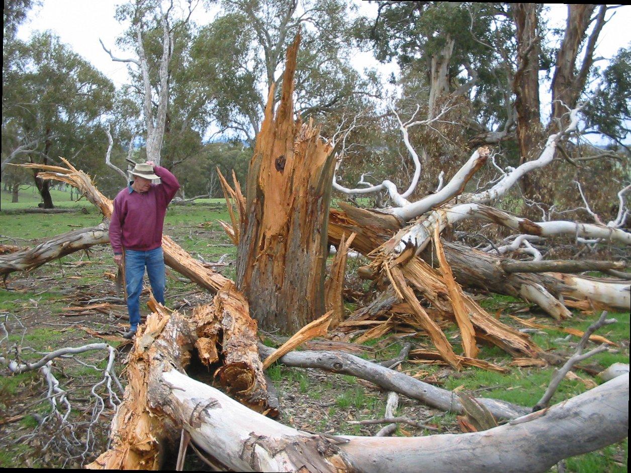 sambaran langsung petir merusak pohon di luar rumah